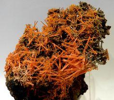rockon-ro:    CROCOITE (Lead Chromate) crystals from the Adelaide Mine in Tasmania, Australia.