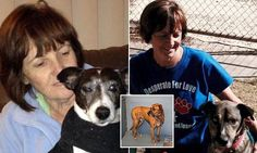 Pictured: Animal rescue home owner mauled to death by a bull mastiff Two Dogs, Puppy Mills, Dog Care Tips, Love Home, Foster Care, Animal Rescue, Australia 2017, Death, Puppies