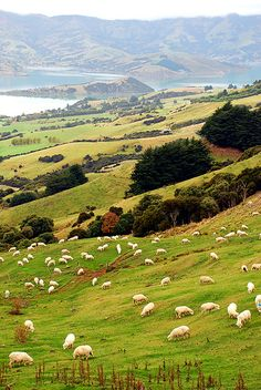 Akaroa Harbour, Duvauchelle, Canterbury, New Zealand.  Photo: geoftheref via Flickr.
