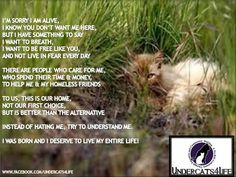 Undercats4Life so sad and true, I wish they all could have a home <3