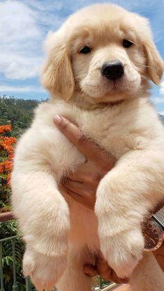 Super Cute Puppies, Baby Animals Super Cute, Cute Baby Dogs, Silly Dogs, Cute Little Puppies, Cute Dogs And Puppies, Cute Little Animals, Cute Funny Animals, I Love Dogs