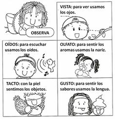 Los cincos sentidos Elementary Spanish, Teaching Spanish, Elementary Schools, Bilingual Classroom, Bilingual Education, Spanish Lesson Plans, Spanish Lessons, Kindergarten Activities, Preschool