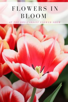 Flowers in bloom at the RHS Flower show, so many beautiful colours