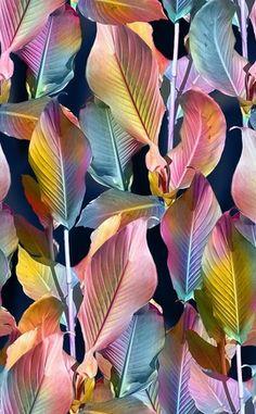 Leaves Wine Bottle Design, Plant Wallpaper, Christmas Frames, Tropical Art, Watercolor Leaves, Vintage Design, Mixed Media Canvas, Linocut Prints, Leaf Prints