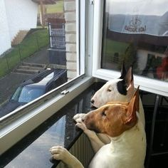 Curious if the postman is coming back after last attack.  :-)