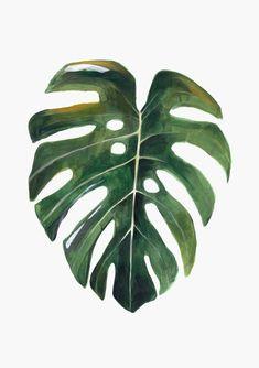 Plants Monstera Illustration 24 Ideas For 2019 Plant Painting, Plant Drawing, Plant Art, Painting & Drawing, Botanical Art, Botanical Illustration, Illustration Art, Illustrations, Watercolor Leaves