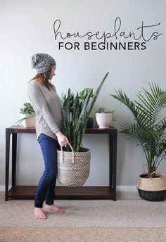 How to keep plants houseplants alive   My Breezy Room