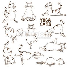 yoga cat - Buscar con Google
