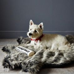 food52:  Don't forget your four-legged friends this holiday season. Faux Fur Dog Bed and more via Provisions