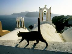 Black cat on the church roof in Greece HD Desktop Wallpaper