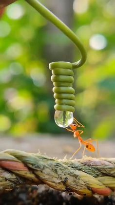 Beautiful Nature Pictures, Beautiful Bugs, Beautiful Nature Scenes, Amazing Nature, Animals Beautiful, Cute Little Animals, Cute Funny Animals, Animal Photography, Nature Photography