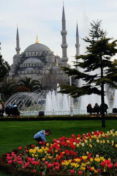 #Türkiye   #Istanbul   #Anadolu   #Muhteşem  Festival de tulipes : Istanbul reprend des couleurs