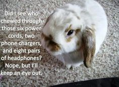 Bunny meme | Bunny Monday Meme*Day (Chew)