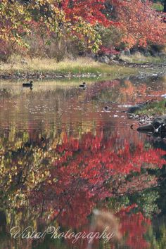 foliage_reflection_with_ducks