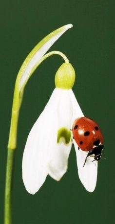 En flor branca