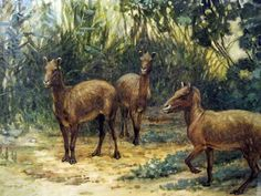 Eohippus by Charles Knight
