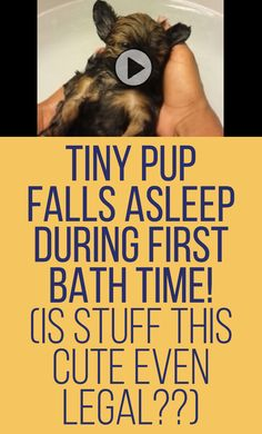 Is being this cute even legal? Tiny pup falls asleep during first bath time!