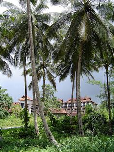 Between the palms. Hotel Biak Beach, West Papua, Indonesia