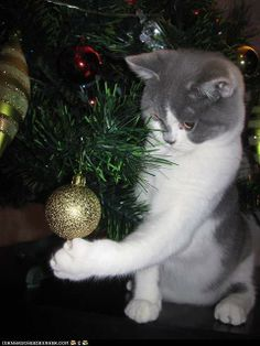 Just adjusting the ornaments!