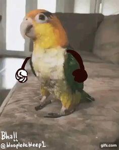 Crazy funny Caique parrot Funny Birds, Cute Birds, Funny Cats, Funny Humour, Funny Memes, Funny Animal Memes, Funny Animal Videos, Funny Animal Pictures, Cute Little Animals
