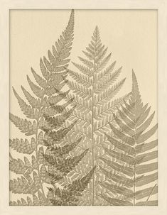 Enhance any space with the textural silhouette of this botanical print. This sepia-tone print captures the structure and grace of ferns. Add natural beauty to your home with this framed giclee reproduction. Doodle Drawings, Tattoo Drawings, Silhouette, Fern Tattoo, Witch Tattoo, Hawaiian Tattoo, Minx Nails, Pressed Flower Art, Nature Aesthetic
