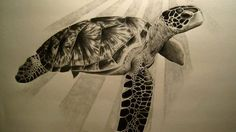 Tartaruga tattoo disegno