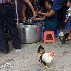 Saigon street scene - A chicken wondering what is for dinner. http://www.nomadicnotes.com/travel-blog/instagram-ho-chi-minh-city/