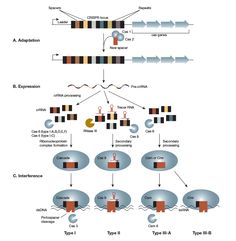 CRISPR-img-01