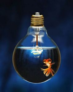 lightbulb fish tank.