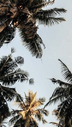 Iphone Wallpaper – Palm Tree iPhone Wallpaper Collection by www.preppywallpap Iphone Wallpaper – Palm Tree iPhone Wallpaper Collection by www.