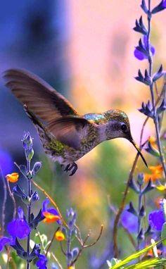 Amazing Hammingbird