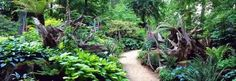 A pathway through the stumpery