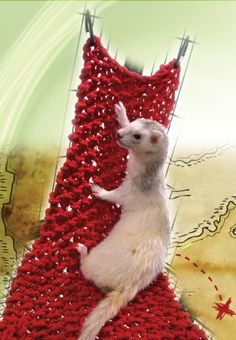 $14.47-$17.95 This woven net is a great climbing accessory for ferrets and will work with most wire cages.