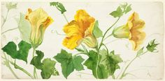 Sophia L. Crownfield: Squash Blossom, early 20th century. National Design Museum