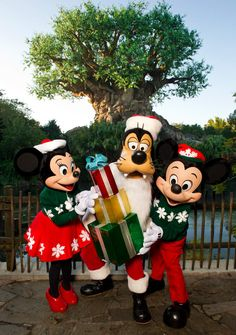 Christmas at Animal Kingdom, would love to experience at Christmastime!