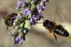 Acupuntura com ferrão de abelha cada vez mais popular na China | #Abelhas, #Acupuntura, #Agulha, #China, #Ferrão