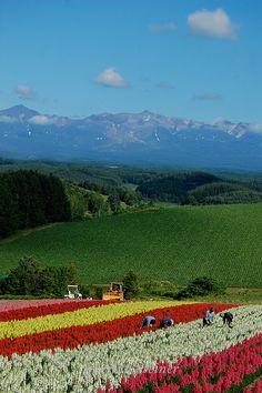Floral Highways, Hokkaido, Japan