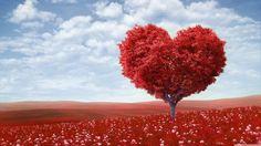 #heart #tree #photography