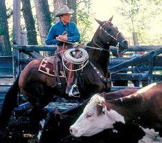 The Horse Whisperer Robert Redford Movies, The Horse Whisperer, Kristin Scott, Ranch Life, Environmentalist, Western Movies, Film Movie, Santa Monica, Cowboys
