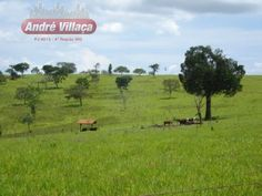 Fazenda - Bambui - Oeste De Minas 242ha - R$ 1.800.000,00