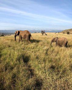 Elephants on a Kenya Safari July 6th, Cute Little Animals, Kenya, Animal Kingdom, Instagram Feed, Safari, Wildlife, Elephant, Landscape