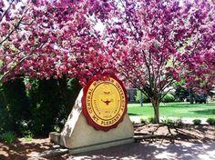 Love CMU in the spring!