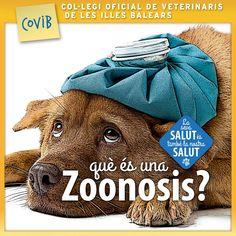 #COVIB #Veterinarisib #zoonosis #mascotas