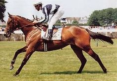 East Of The Moon by Private Account out of Miesque by Nureyev. Duo classic winner in France. Dam of graded stakes winner Moon Driver and is the second dam of stakes winners Evasive and Tenth Star.