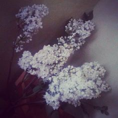 #white #brown #green #flower