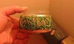 Savannah grasses on glass jar done in sculpey clay