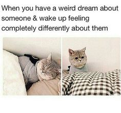 Ha ha! Seriously though…That cat's face expresses it so well!