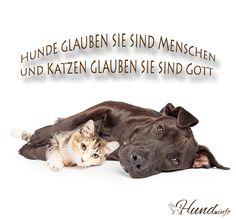 An dieser Weisheit ist was dran, oder? 😉 Hunde glaubensie sind Menschen, Katzen glaubensie sind Gott.  shares Facebook Twitter Google+ Pinterest Xing