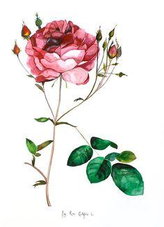 Rose - Original Watercolor Painting - 18x24 - Studio Clearance - 60% Off (originally $548, now $220)
