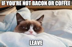 Grumpy Cat - ''I get in this weird mood sometimes where I don't want to talk to anybody and just want to be left alone. I call this mood, 'Awake'.'' (The Official Grumpy Cat) Grumpy Cat Quotes, Funny Grumpy Cat Memes, Funny Cats, Funny Animals, Funny Memes, Funniest Animals, Funny Quotes, Funny Sleep, Dog Quotes